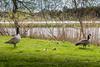 The duck family (J. Pelz) Tags: bird babyduck canon wildlife guarding ducks nature