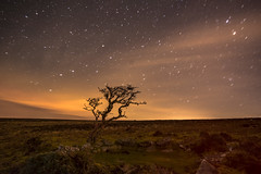 Hookney Tor 1 (Anna_Walls) Tags: dartmoor devon hookneytor lonetrees night places stars trees dartmoornationalpark dnpa nightphotography astrophotography