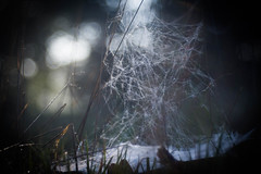 No Way out (ursulamller900) Tags: trioplan2950 spiderweb spinnennetz bokeh meadow wiese
