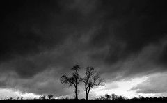 The Minimal couple. (Gordie Broon.) Tags: trees landscape scottishhighlands rossshire minimal dull monochrome schottland scotland scenery paysage ecosse thecouple scenic scozia escocia blackwhite contin field paisaje tottio gordiebroonphotography marybank strathpeffer szkocja caledonia alba nc500 canon5dmklll canon1635f4l geotagged silhouette 2017 moody bigsky giottos dreich