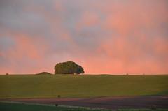 NN1_9619 (Avebury Blue) Tags: avebury sunset ridgeway marlborough wiltshire hillside downs tumulus beech barrow nikon d7000 nofilter