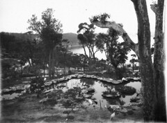 Waterbird enclosure: Taronga Zoological Park (State Library of New South Wales collection) Tags: statelibraryofnewsouthwales sydney harbour views zoos taronga architecture buildings