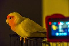 Recording The Bird
