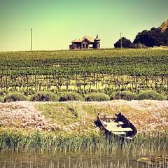 That Old House (cb|dg photo) Tags: reeds pond rowboat santaluciahighlands salinasvalley soledad building vines grape vineyard architecture house wrathwines