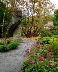 Clyne in Bloom Mid-May 2017 (6) (goweravig) Tags: flowers blooms admiralstower clyne clynegardens mayals swansea wales uk parks gardens