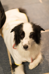 20170521_193852.jpg (ch.90) Tags: dog border collie animal bordercollie