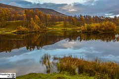Glen Clova in autumn (ola_er) Tags: hills autumn tree birch gold water reflection angus scotland nikon landscape