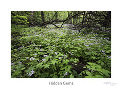 Hidden Gems (baldwinm16) Tags: il illinois may themortonarboretum environment forest habitat landscape midwest nature season spring woodland woods mortonarboretum things photography