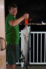 Bluefish (mddnrfish) Tags: bluefish