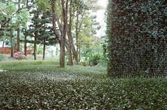 000373940014 (Nai.) Tags: expiredfilm lomographyiso100 colornegativefilm 135film pentaxmz3 slr naturalcolors plants green trees pentaxmsmc35mm128