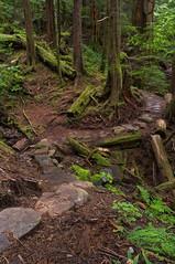 Rainbird Trail - Ketchikan, AK (Christopher J May) Tags: nature landscape trees forest rainforest am alaska ketchikan rainbirdtrail trail