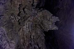 Glow worms w jaskinii Waipu | Glow worms in Waipu Cave