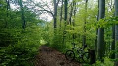über den Heuberg (twinni) Tags: mw1504 04052017 bike biketour salzburg austria mtb bergziege winterrradl winterbike 20 flachgau österreich heuberg