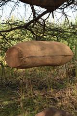 20170204_092 (zubaa) Tags: kamweti nairobi kenya baringo traditional beehive loghive