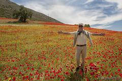 Piero entre amapolas (Lucas Gutiérrez) Tags: camñ campodeamapolas piero loja primavera paisaje rojoamapola papaver granadanatural lucasgutierrezjimenez