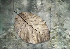 Natures Tapestry - Portfolio #2 (Perfectoarts) Tags: naturestapestry portfolio textures leaves nature creativeedit ingriddouglas perfectoarts