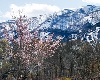 Gassan Spring Snowscape