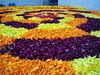 IMG_20160913_040231 (bhagwathi hariharan) Tags: onam pookalam flower rangoli kolam carpet floral nalasopara nallasopara virar aathapookalam tiruonam