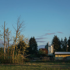 Calm (rosenunezsmith) Tags: lanecounty goldenhour regionaldistinctions sunset recycling inc scientificdevelopments rubber trees semirural builtlandscape semiindustrial hopper photos5lexar fence magichour pacificnorthwest lumberindustry eugene america oregon sky field pnw upperleftusa fences fields