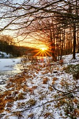 Winter and sun, Norway (Vest der ute) Tags: xt2 winter norway rogaland haugesund djupadalen snow sunset trees grass outdoor fav200