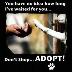 IVE WAITED FOR YOU ADOPT (dflmanagement) Tags: dog adopt rescue animal pet breeder cat