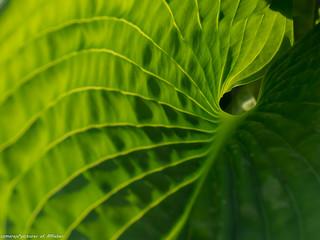 Grün - Design in der Natur / Explorebild 16.5.2017.  Dankeschön!
