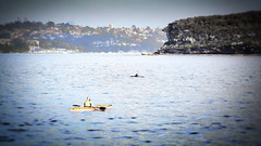 63+529: The girl and the dolphin (geemuses) Tags: kayak kayaker paddler paddle watersport sport sydneyharbour sydney nsw manly dolphin mammal water sea ocean scenic landscape animal nature beauty headland rocks rocksandwater green vegetation woman girl people