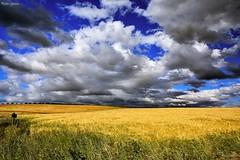 Yellow (Peideluo) Tags: spring country colors clouds sky campos cielo nubes amarillo paisaje campo hierba
