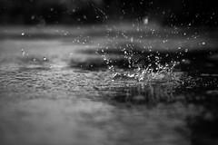 Raindrop Explodes part 2 (Jonathan Goddard1) Tags: olympus omd em1ii 1240 f28 pro rain raindrop droplets water puddle monochrome dark