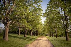 golden path (127/365) (severalsnakes) Tags: 365 kansas m3528 pentax saraspaedy shawnee shawneemissionpark k1 manual manualfocus path road