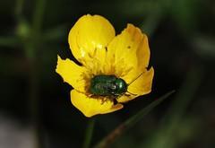 Bug (Hugo von Schreck) Tags: hugovonschreck macro makro bug käfer insect insekt tamronsp90mmf28divcusdmacro11f017 greatphotographers canoneos5dsr onlythebestofnature