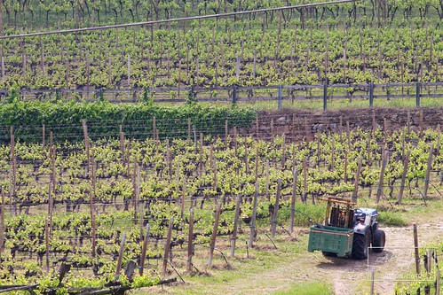 "Strada del Vino - Suedtiroler Weinstrasse • <a style=""font-size:0.8em;"" href=""http://www.flickr.com/photos/104879414@N07/34030158880/"" target=""_blank"">View on Flickr</a>"