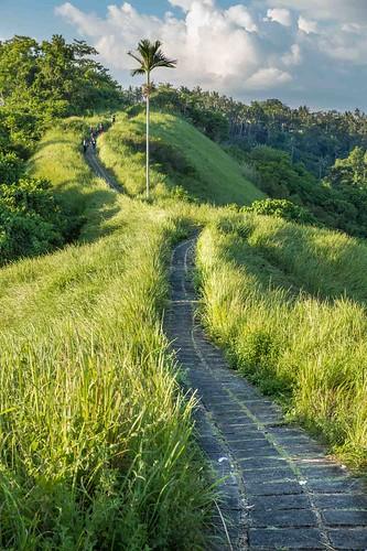 Trekking campuhan ridge - Bali