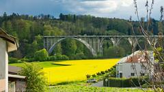 Brücke bei Herrenschwanden Bern - Rapsfeld im Abendlicht / Bridge near Berne, Switzerland with rape field (Anselm11) Tags: herrenschwanden brücke bridge raps rape yellow field feld landschaft