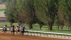 شراسة تنافس ! (Meshari Fahad) Tags: canon7d horses racing force forcing riyadh animals light