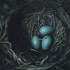 .my nest or yours 💙💙💙. (allyson.marie) Tags: nature macro bird blue egg nest