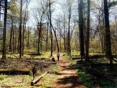 in the deep woods... (BillsExplorations) Tags: park spring woods deep beautiful warm illinois oregon mtmorris walk whitepinesstatepark pinetrees trees whitepines lonefigure