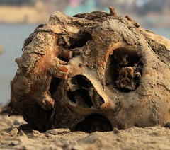 IMG_6245 (anthrax013) Tags: india varanasi corpse dead death bones skull flesh decomposition rot decay necro necrophilia