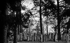 Jüdischer Friedhof - Jewish Graveyard (Bernd Kretzer) Tags: jüdischer friedhof jewish graveyard bechhofen franken franconia nikon afs dx nikkor 35mm f18 g