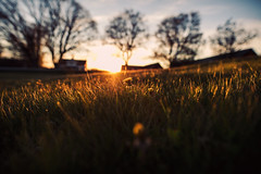 rural (ewitsoe) Tags: sweden southernsweden erikwitsoe ewitsoe canon eos5ds sigma 20mm 14 europe heritage journey trees farmhouse farm frame wide rural sunset sun grass low blur lowdof flare spring evening night setting dusk