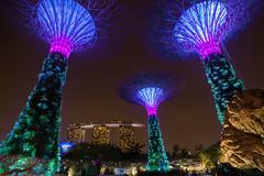 Concrete Jungle (Lemuel Montejo) Tags: concrete jungle supertree supertreegrove singapore singapura sg night buildings architecture