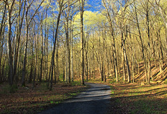 Spring Leaf-Out (9) (Nicholas_T) Tags: pennsylvania clintoncounty waynetownship zindelpark trees forest deciduous temperatedeciduousforest path walkingpath spring nature creativecommons