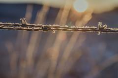 sun fencing