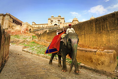Fuerte Amber  Jaipur 12 (rokobilbo) Tags: jaipur india amberpalace colors people environment elephants hospitability color joy