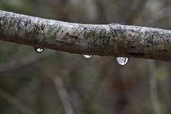 Tiny Woods Reflections (brucetopher) Tags: beads drop droplet rain raindrop water woods forest macro bokeh branch lichen etch pattern nature natural