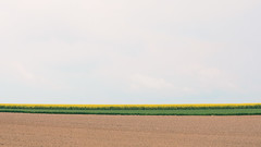 Strip of Spring (panfot_O (Bernd Walz)) Tags: landscape field fields agriculture soil rape spring rural countryside farmland emptiness minimalism minimalistic fineart transformedlandscape germany alzeyerhügelland space