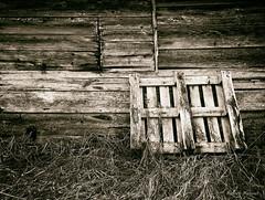 barn boards (jrmax_51) Tags: monochrome blackandwhite barnboard alberta farm