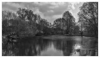Swan Lake ;-)