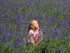 in amongst the bluebells (19andy76) Tags: bluebells portrait pointandclick compact southyorkshire yorkshire woodlands uk