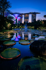 Secret Garden (Chye Guan, Tan) Tags: gardenbythebay garden gardencity landscape cityscape marinabay marinabaysands supertree bluehour lilypond lily waterlily